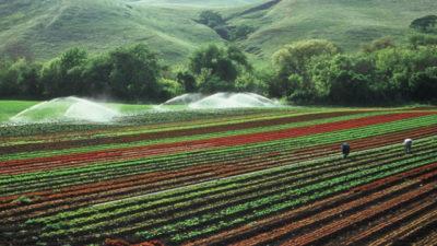 Tarım Arazileri Tarlalar Borsaya mı Girecek?