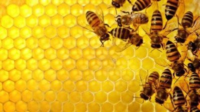 Arıcılık Hibe Destekleri 2018-09-22