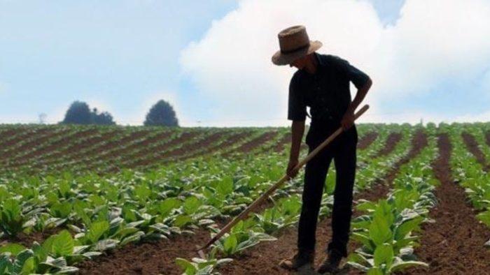 Genç Çiftçiye Hibe Desteği Nedir – Nasıl Alınır?