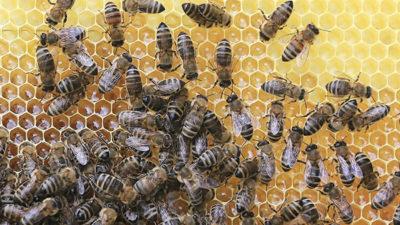 Organik Arıcılık Kovan Başı Destek Başvurusu