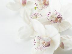 Orkide Nasıl Çiçek Açtırılır? | bilgibankan.com