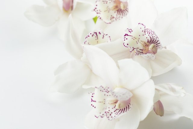 Orkide Nasıl Çiçek Açtırılır?   bilgibankan.com
